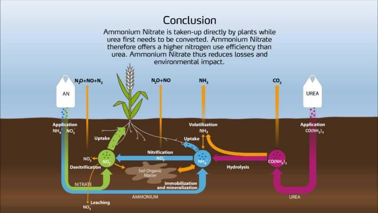Potential Hazards of Ammonium Nitrate